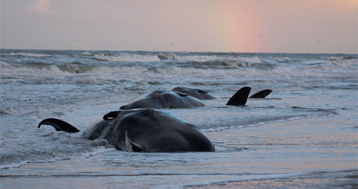 Whales washed up on shore